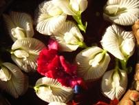 open dharma generosity